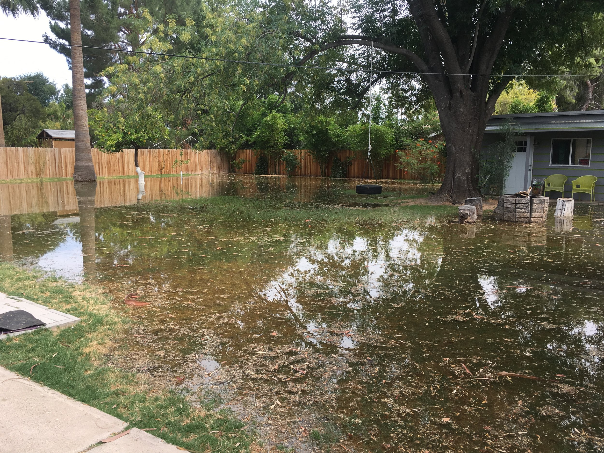 Yard with irrigated Lawn