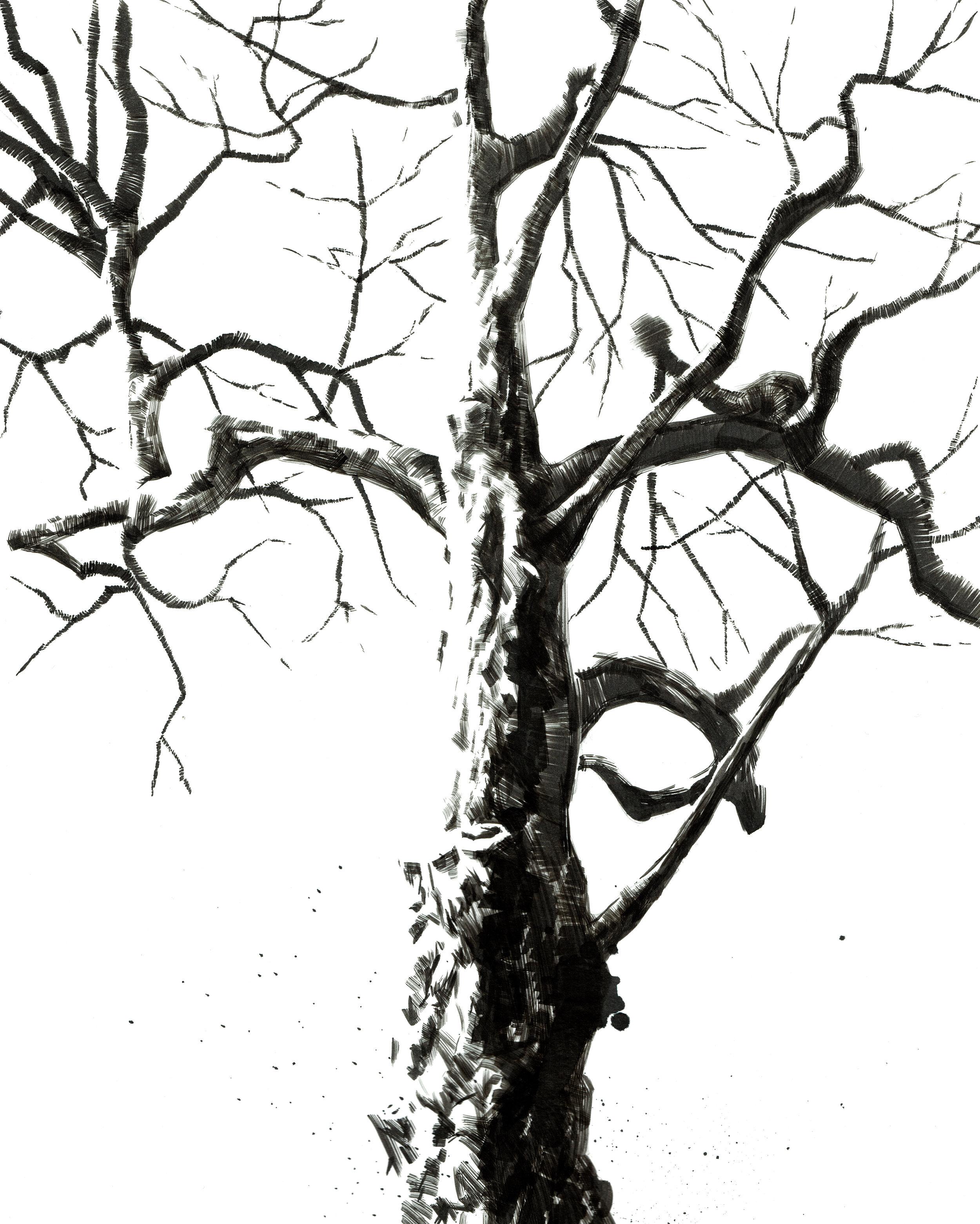 tree-study-02.jpg