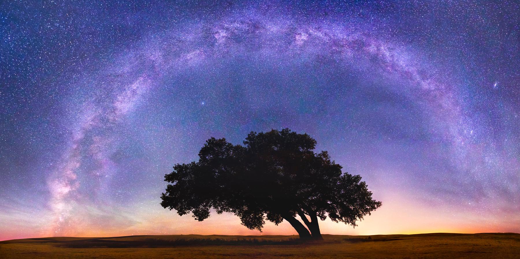 Pano1 Tree Brighter.jpg