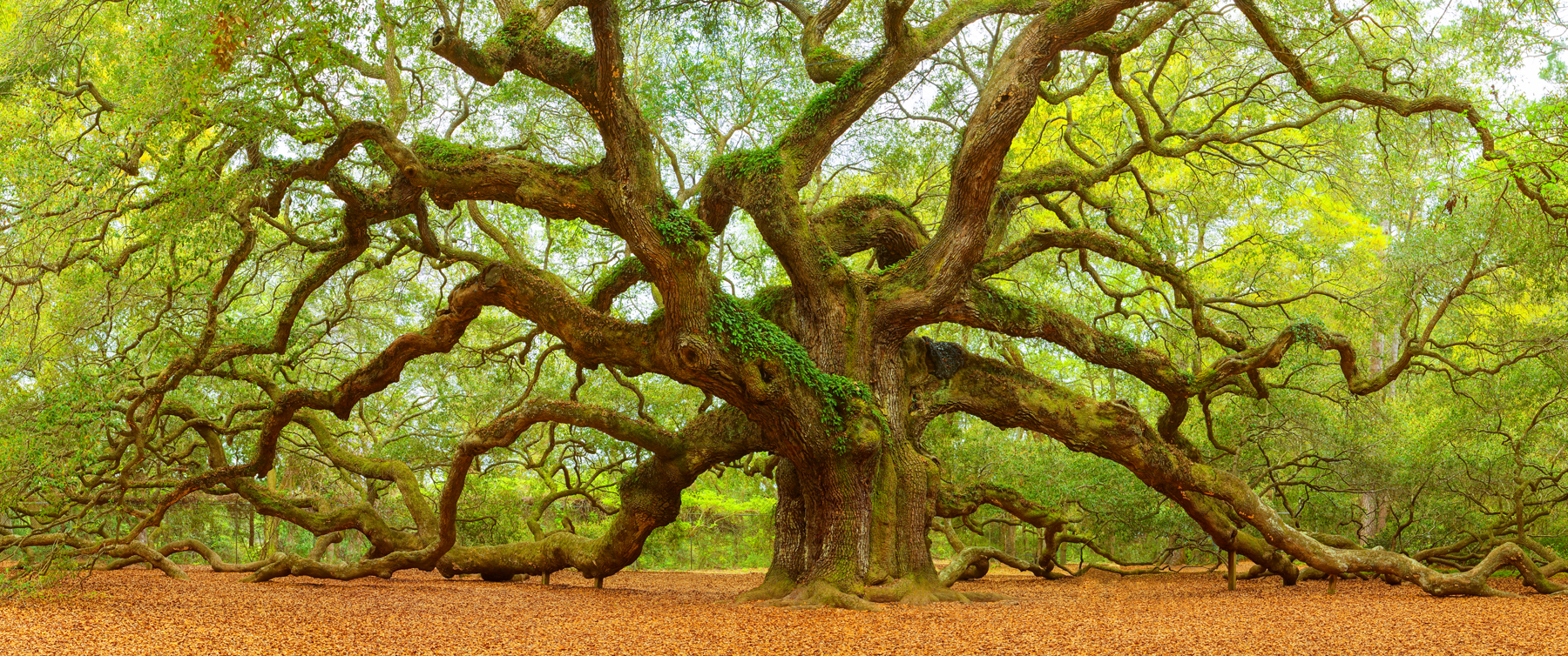 Angel Oak 25x60.jpg