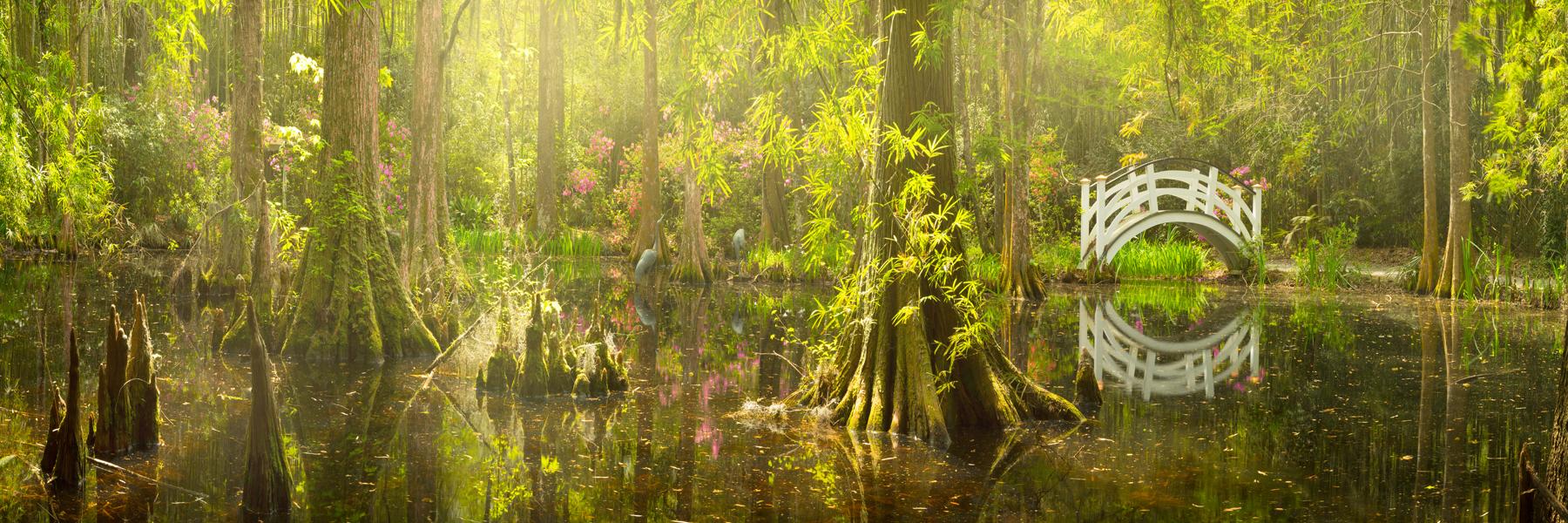 Trees - Magnolia Gardens swamp.jpg