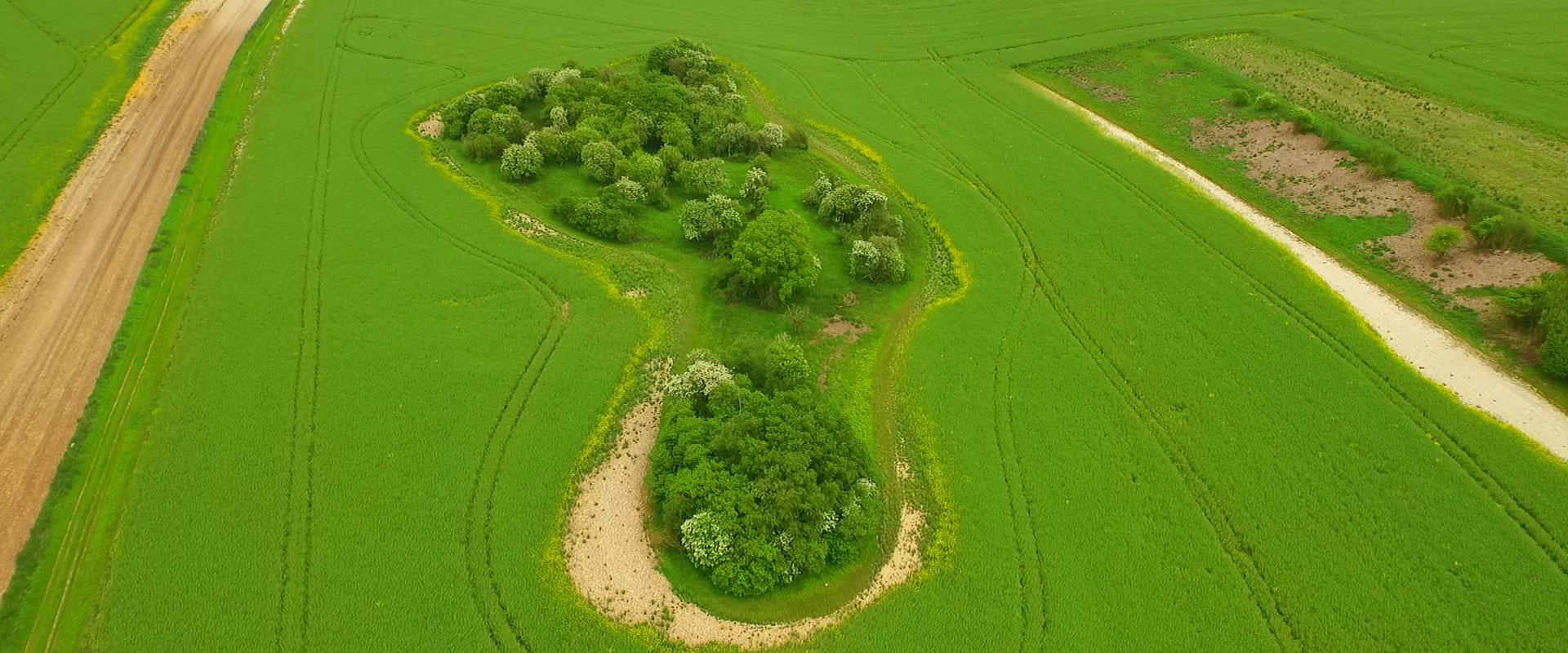 Green-footprint-5.jpg