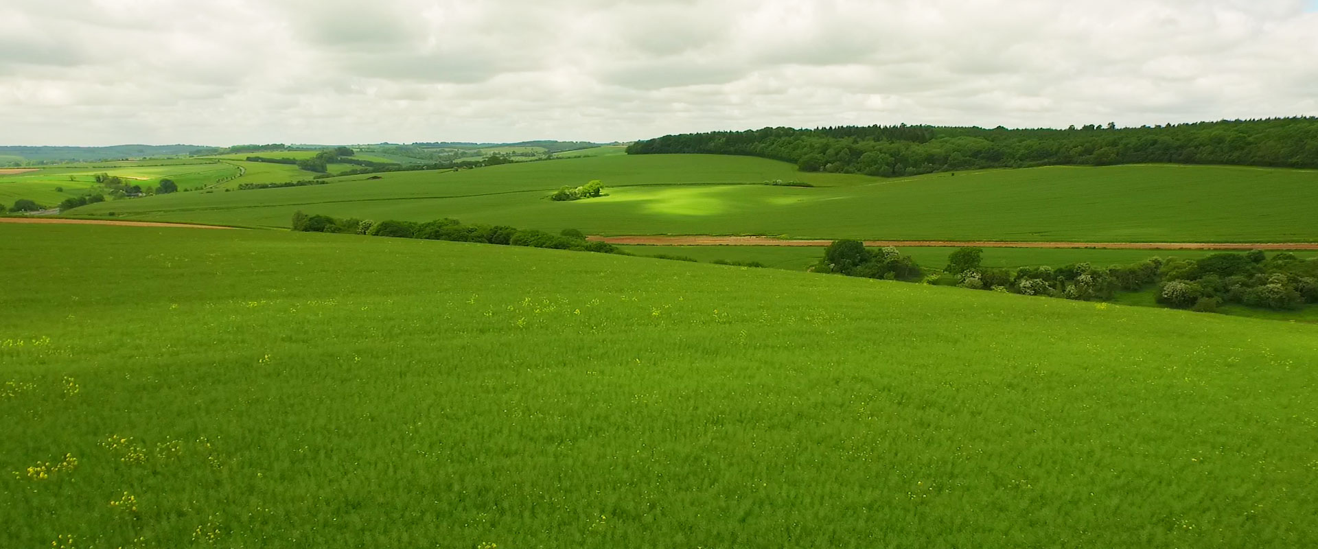 Green-footprint-3.jpg