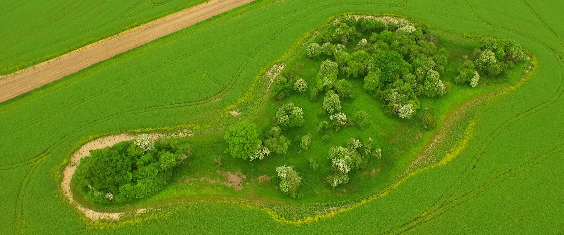 Green-footprint-8.jpg