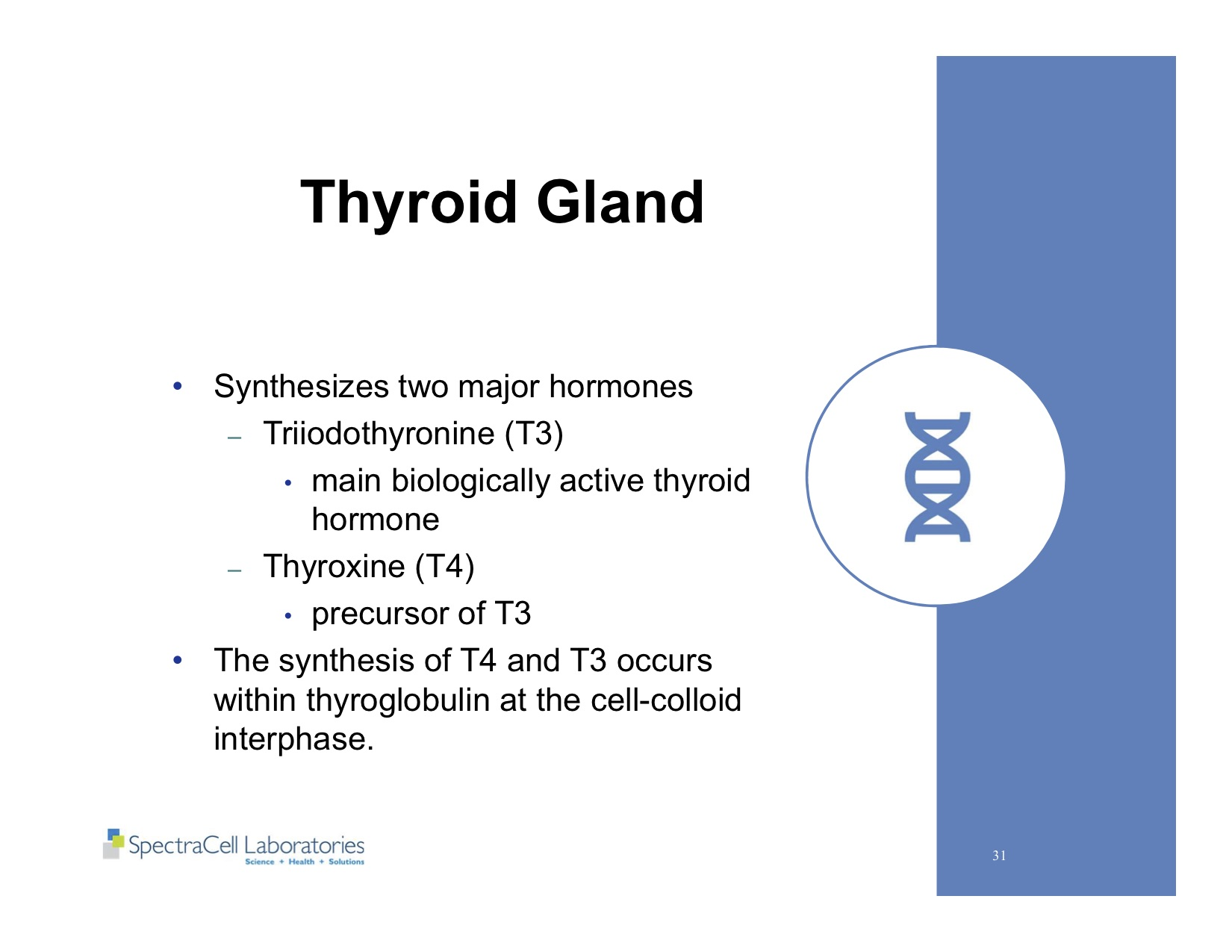 Autism and Thyroid slides 31.jpg