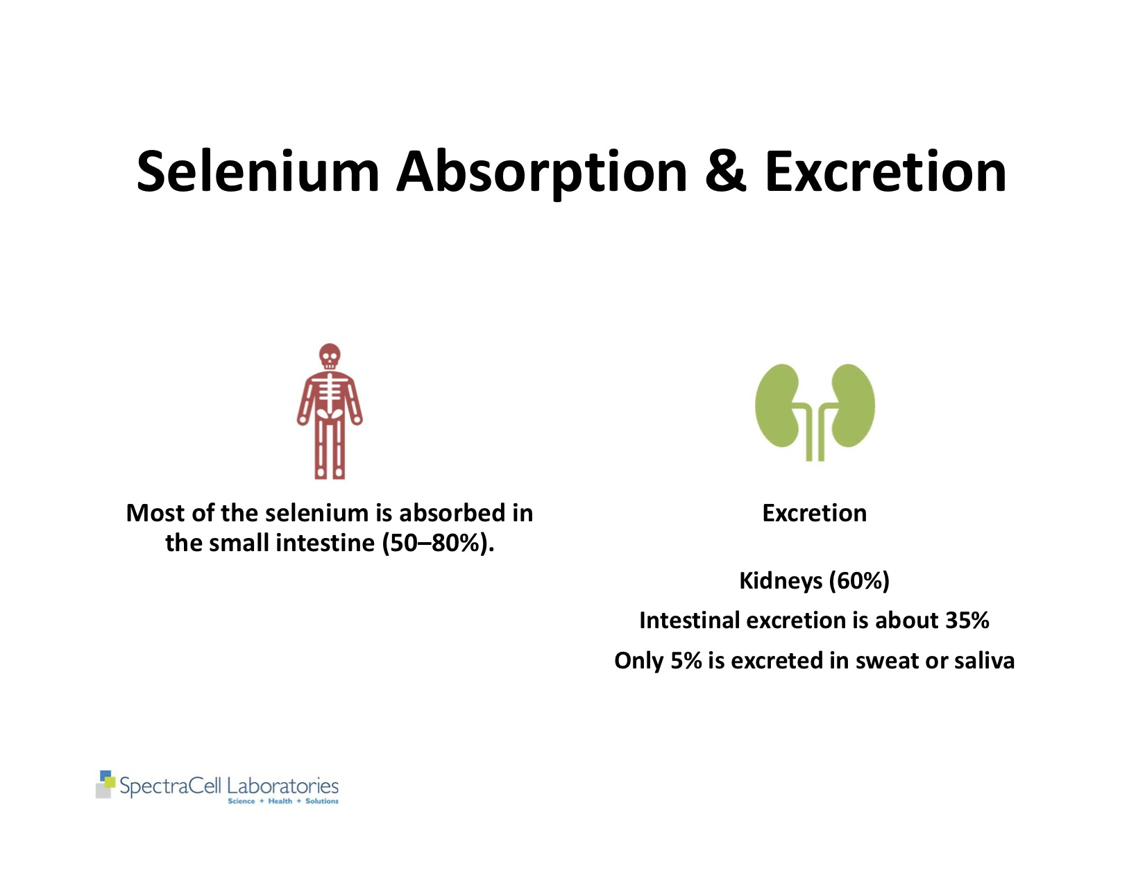 Autism and Thyroid slides 43.jpg