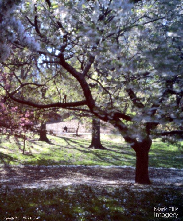 Blossoms-Impression-(pinhole).jpg