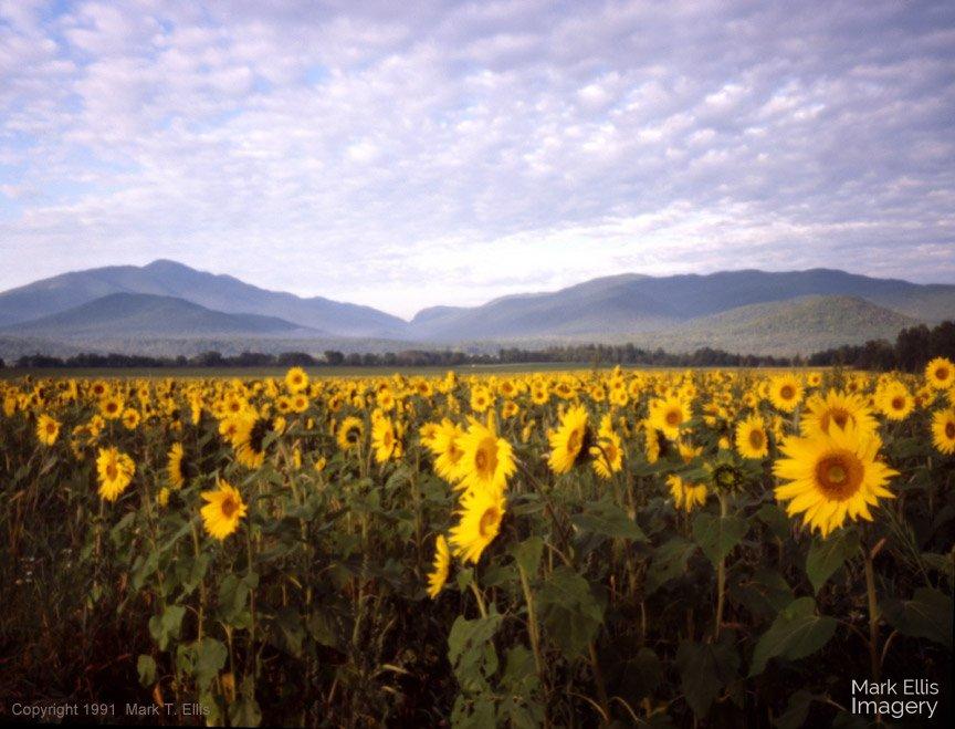 SunflowerMountains.jpg