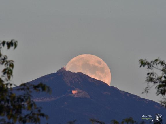 whiteface buck moon vs2 sml cprt.jpg
