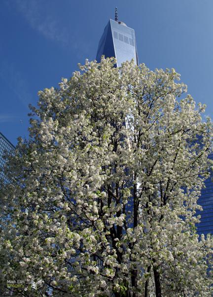 The Survivor Tree sml cprt.jpg