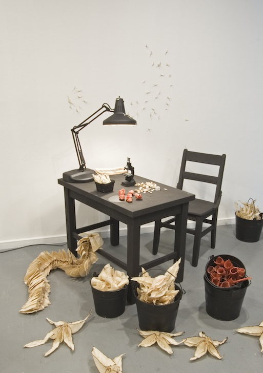 A Glitch in the Phylum at NINE GALLERY, 2007, Mixed media, Dimensions variable