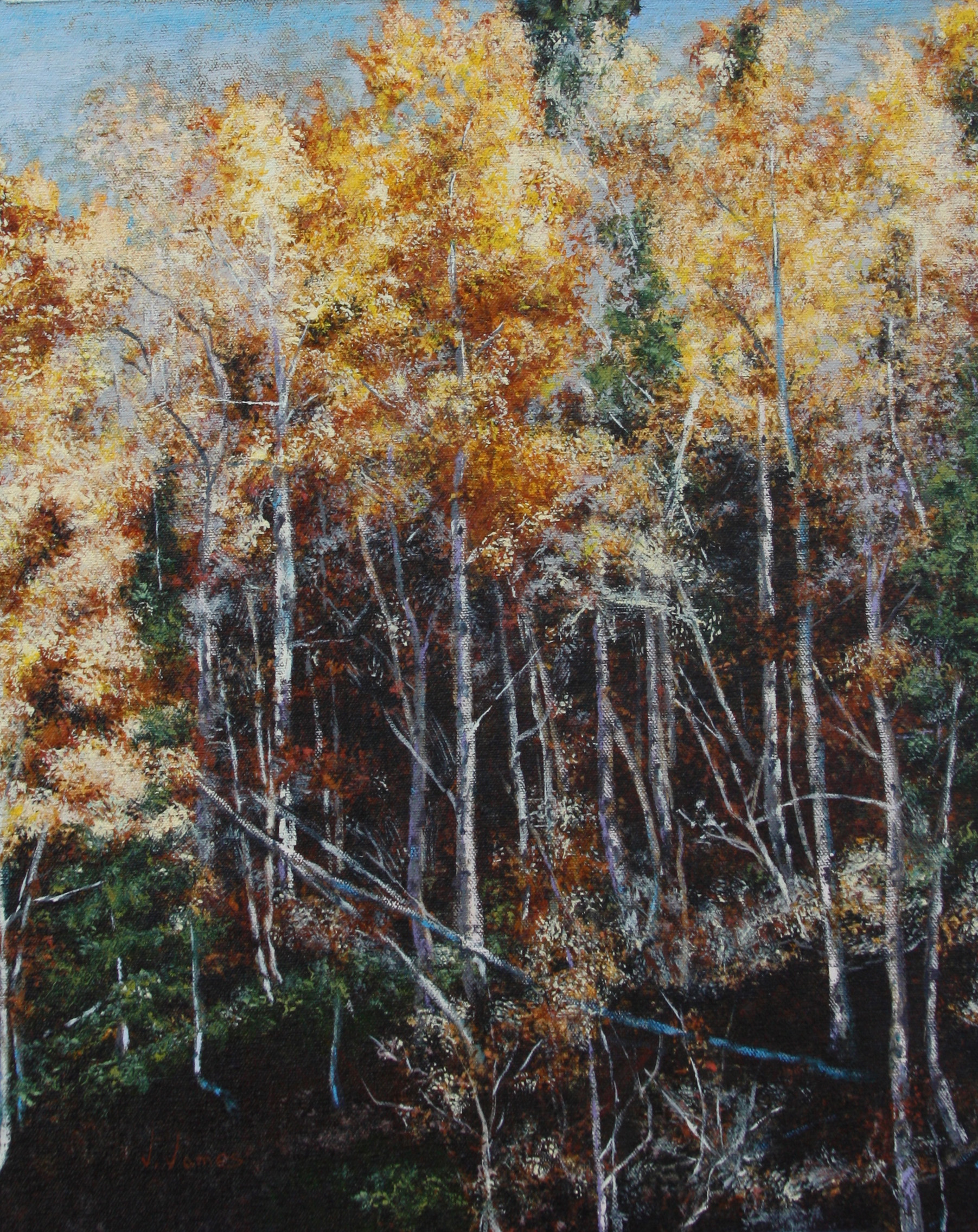 "White Aspen, 20"" x 16"" Oil on Canvas"