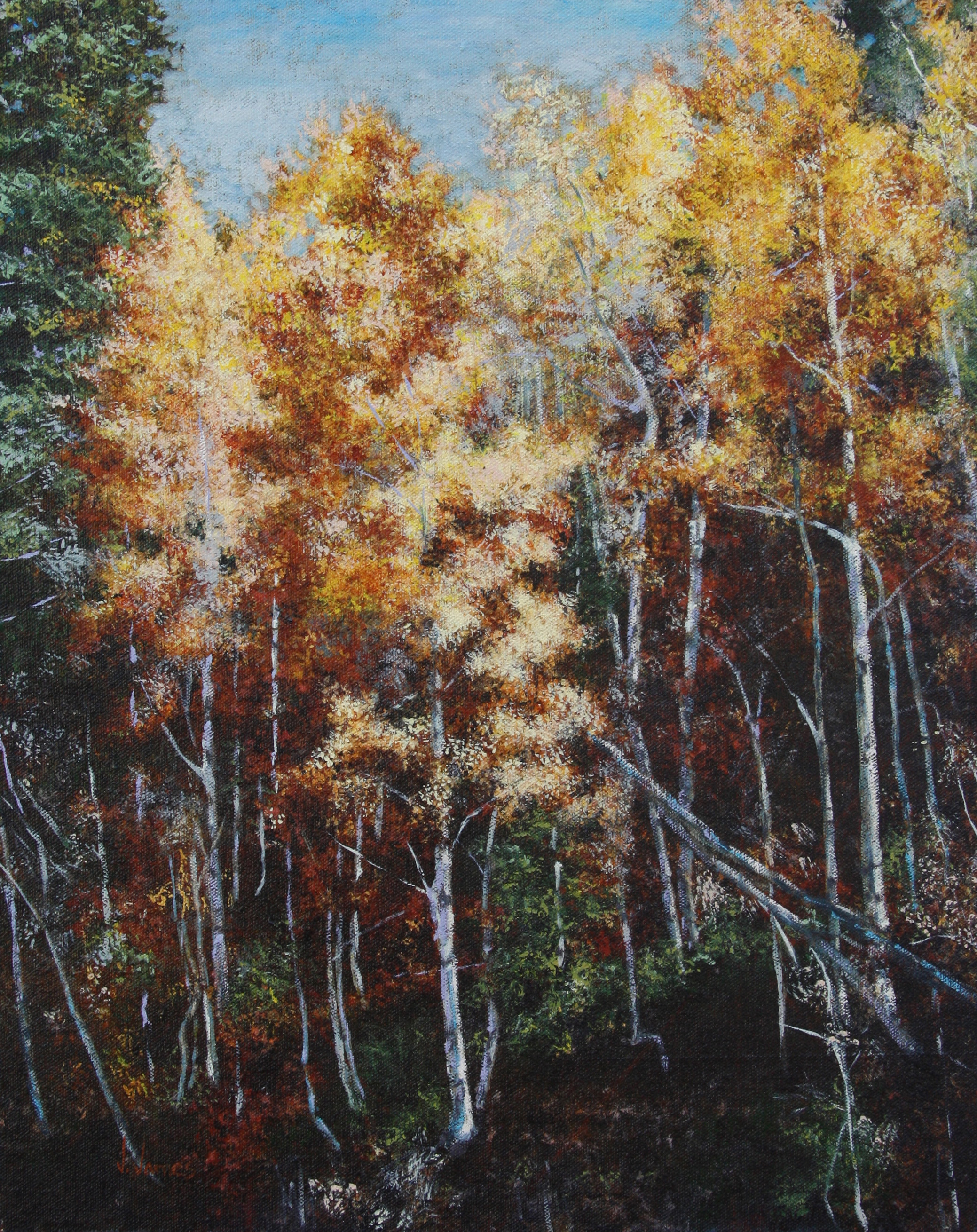 "Quaking Aspen, 20"" x 16"" Oil on Canvas"