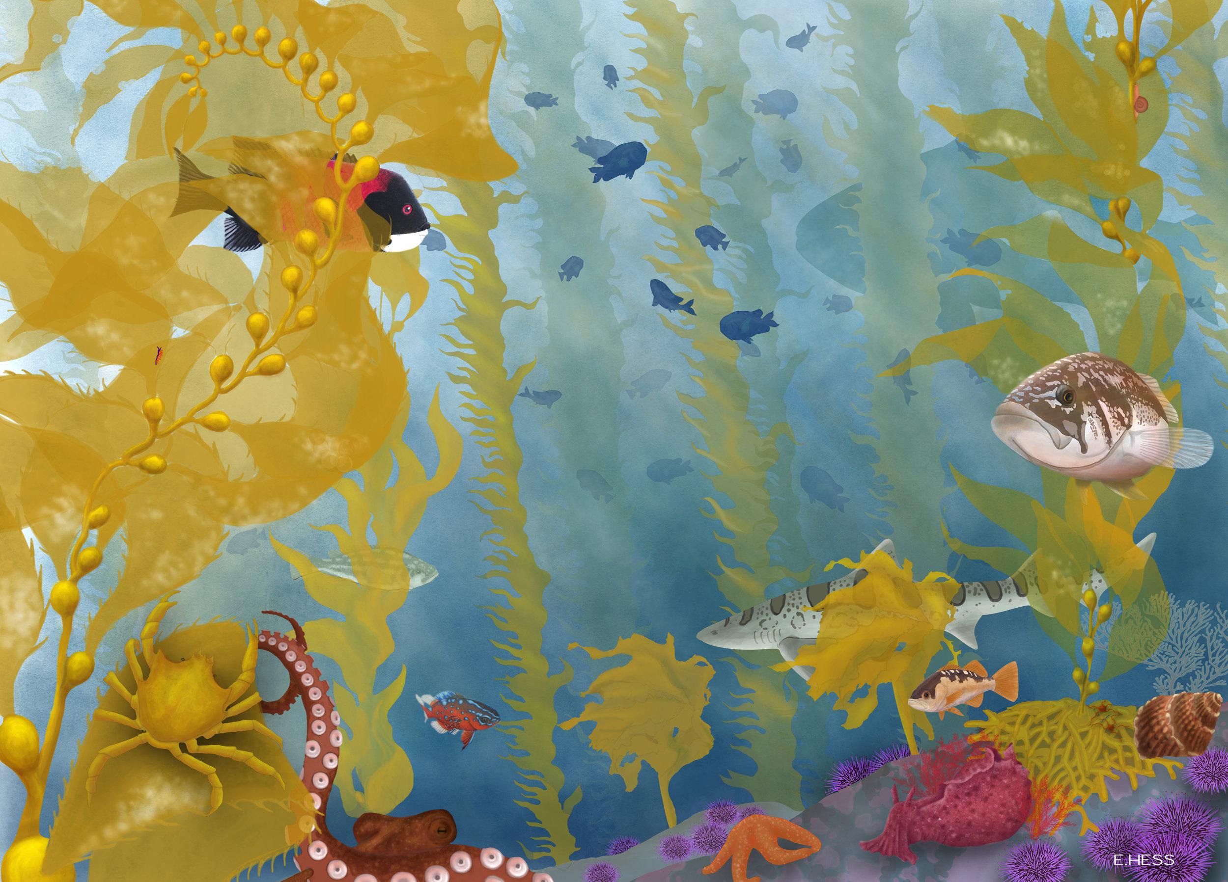 kelp forest.jpg