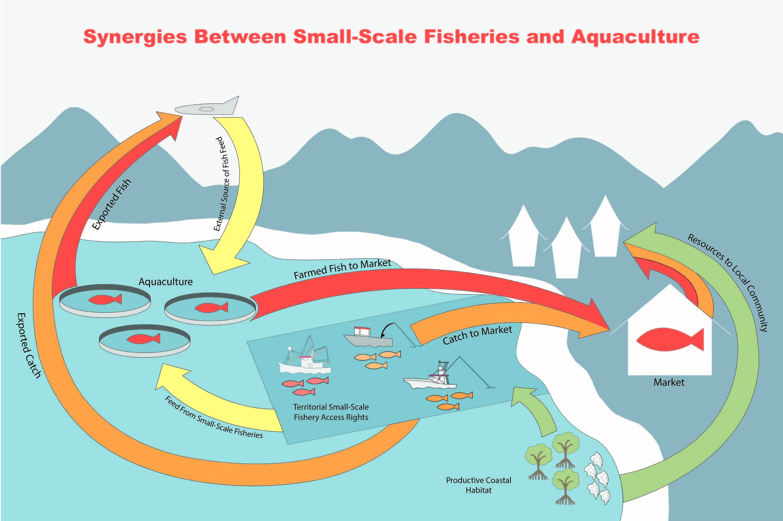 - This diagram is the counterpoint for the relationship between small-scale fisheries and aquaculture systems. This illustrates how the two can work synergistically when spatial rights, the supply chain, and risk to nearby habitats are taken into consideration.These two pieces are opening visuals for a scientific paper by Fiorenza Micheli et al. from Stanford's Hopkins Marine Station in Pacific Grove, California.