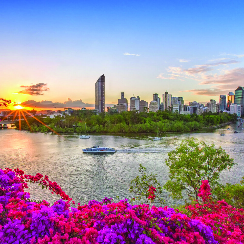 Brisbane bouganvillea.jpg
