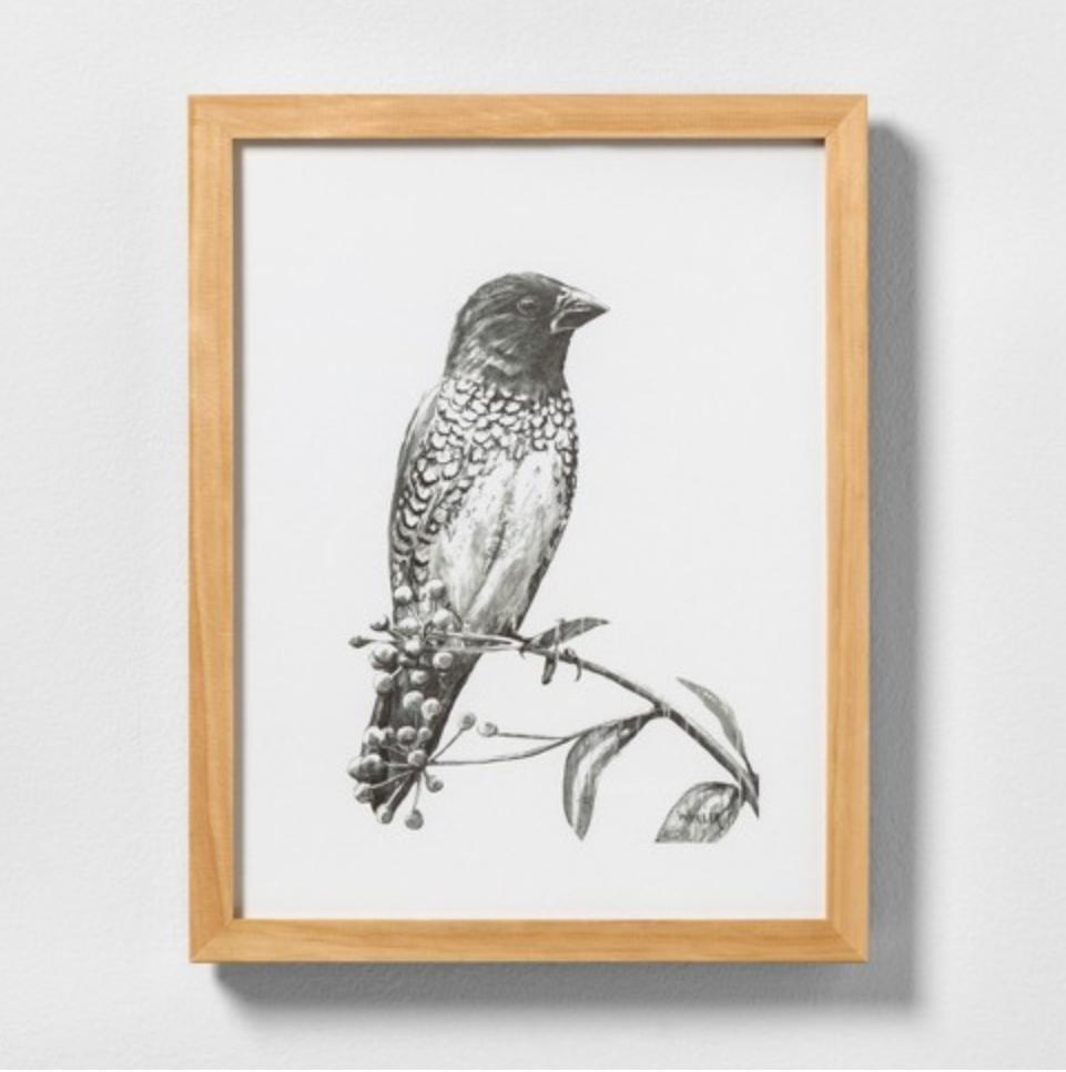 sketched bird.PNG