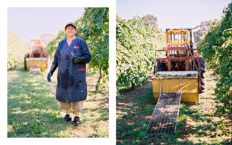 Grape Harvester and Equipment Lugo, Italy  2017