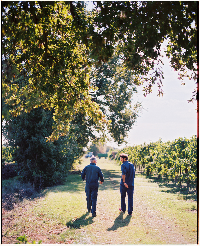 Grape Harvesters Lugo, Italy  2017