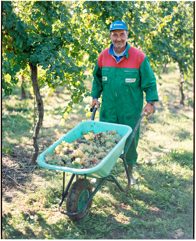 Grape Harvester Lugo, Italy  2017