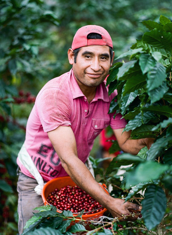 Coffee Picker Puebla, Mexico  2015