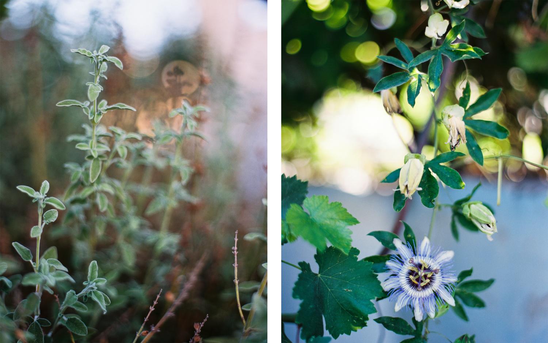 Garden Details Hebron, Palestine West Bank  2015