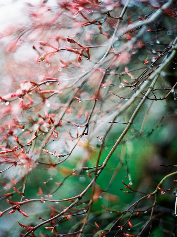Garden Detail Portland, Oregon USA  2016