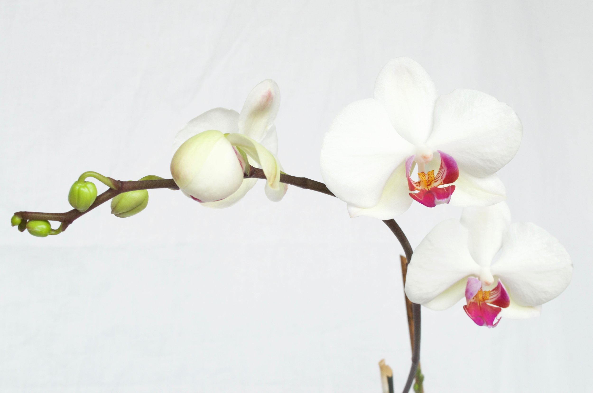 Growing-Orchids-Basic-Care_DSC0048.jpg