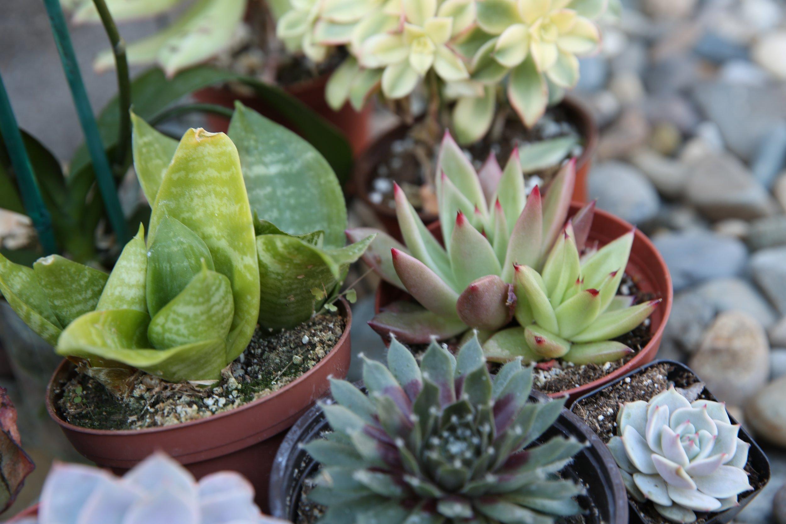 Los-Angeles-Flower-Market_KL2A1650.jpg