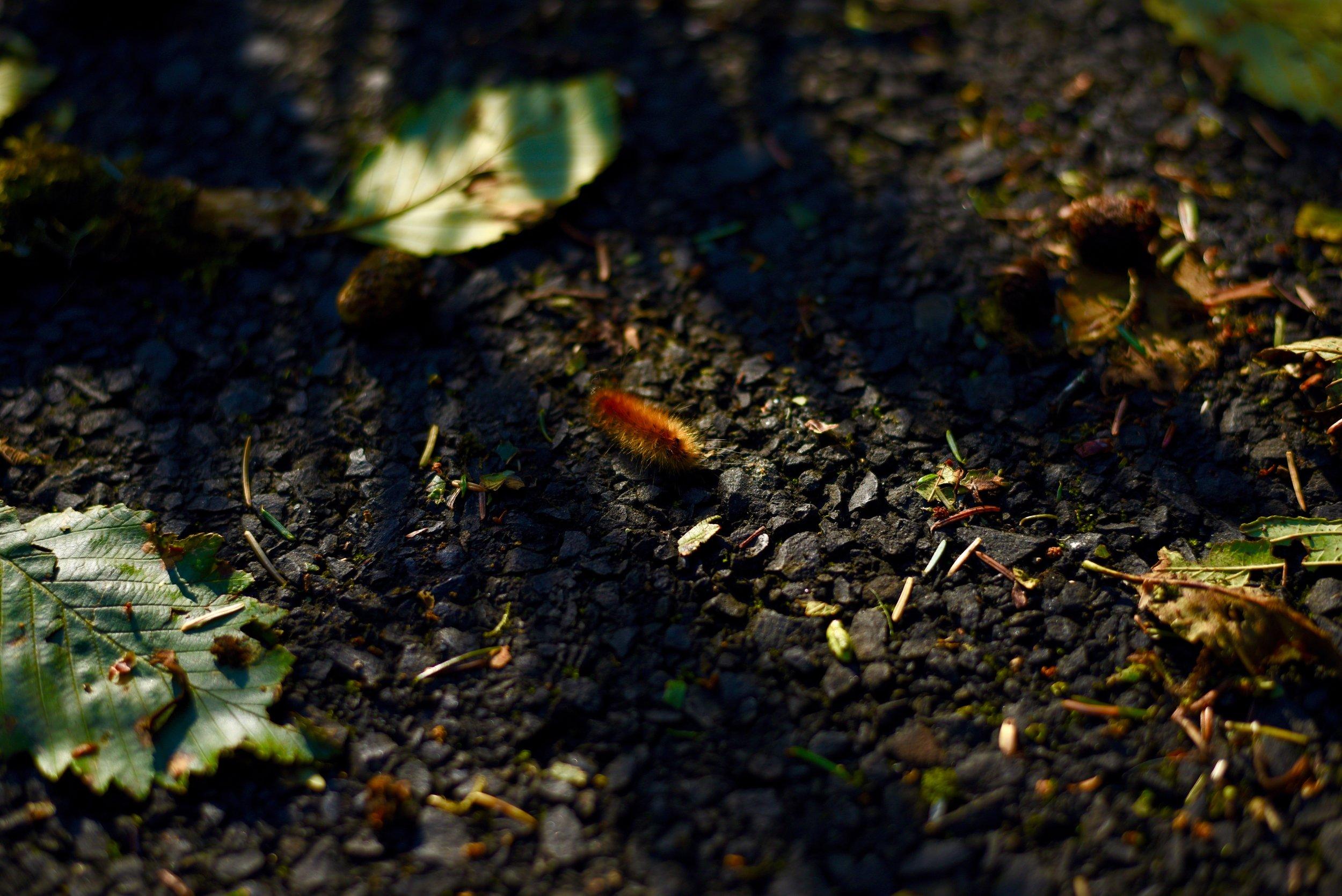 Hiking in Portland_DSC_9708.jpg