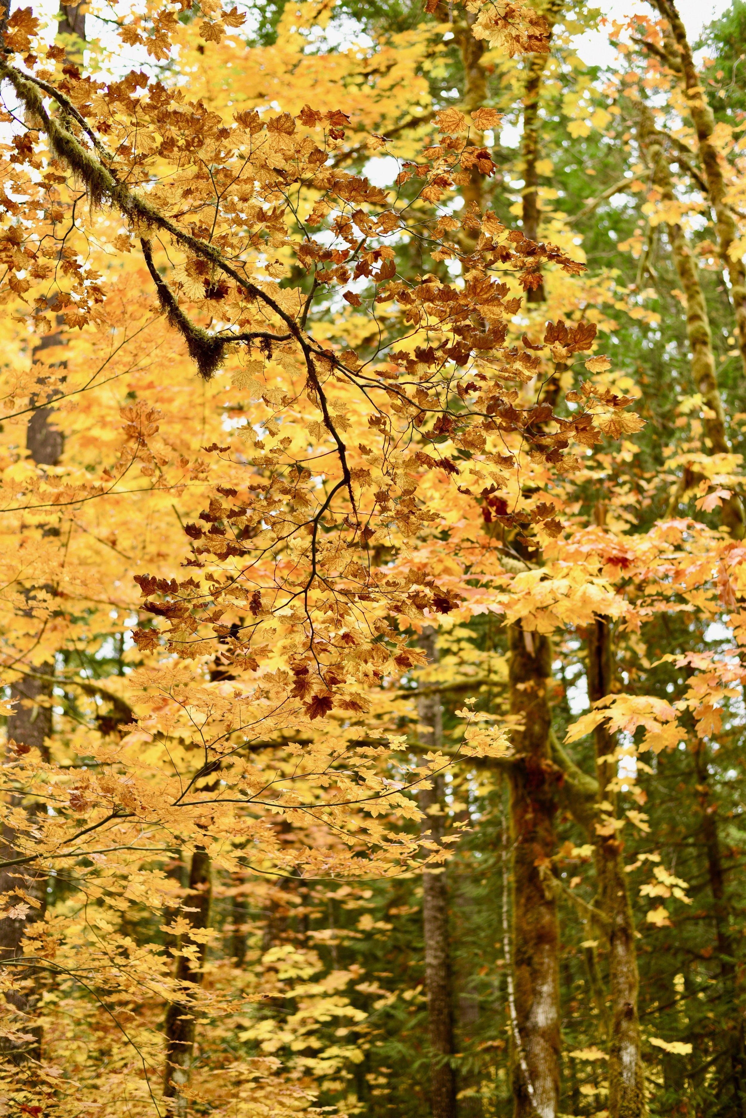 Hiking in Portland_DSC_9755.jpg