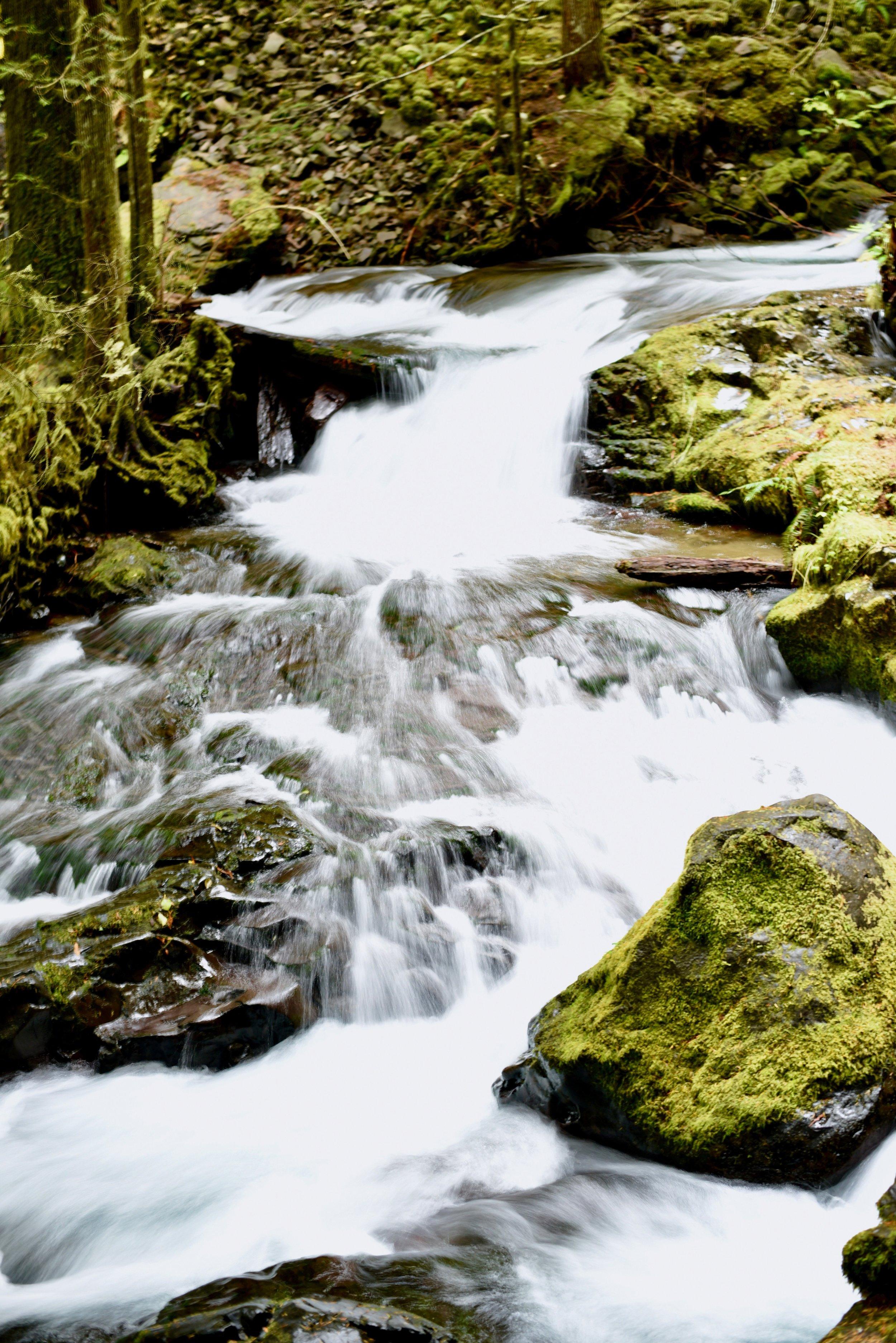 Hiking in Portland_DSC_9812.jpg