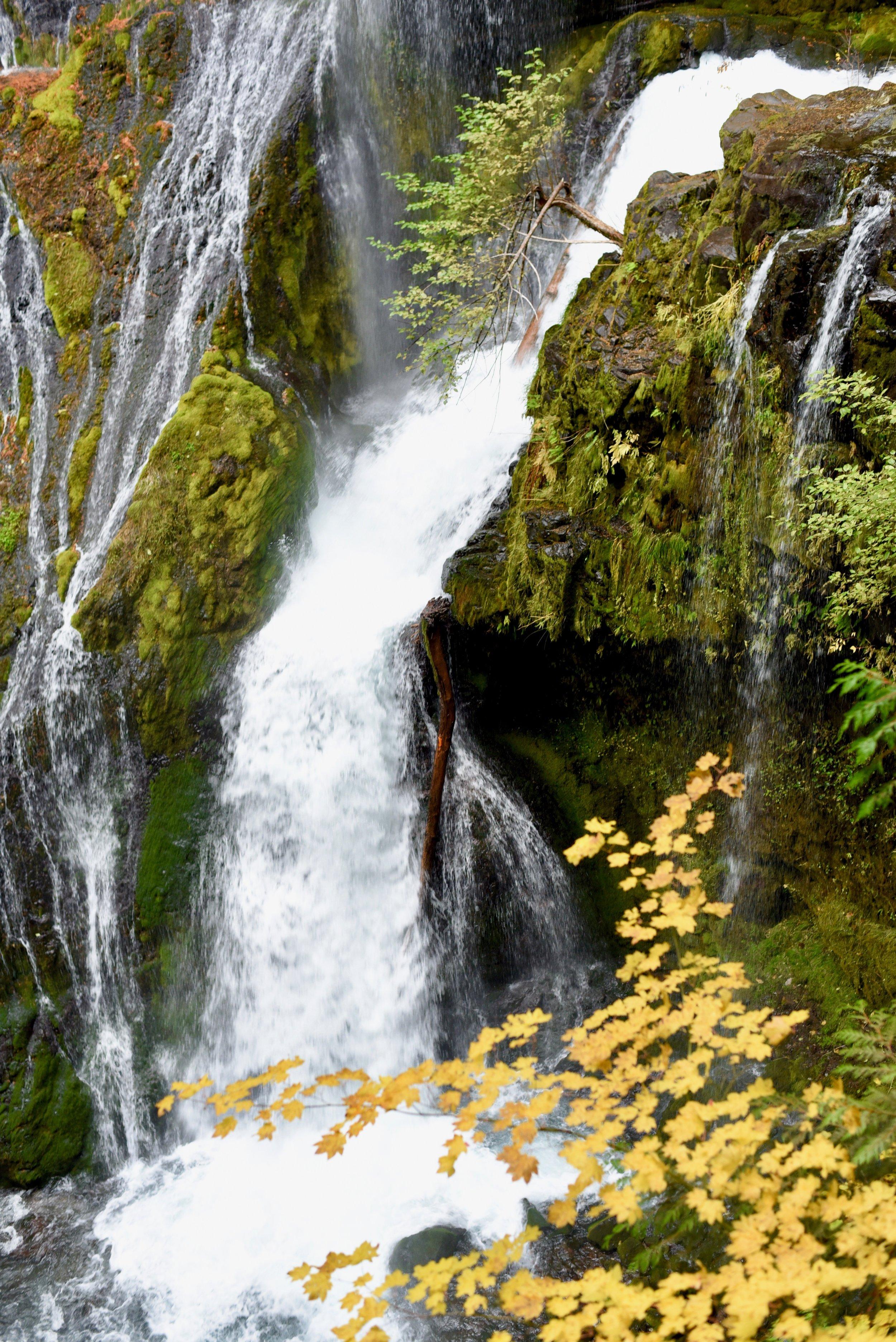 Hiking in Portland_DSC_9793.jpg