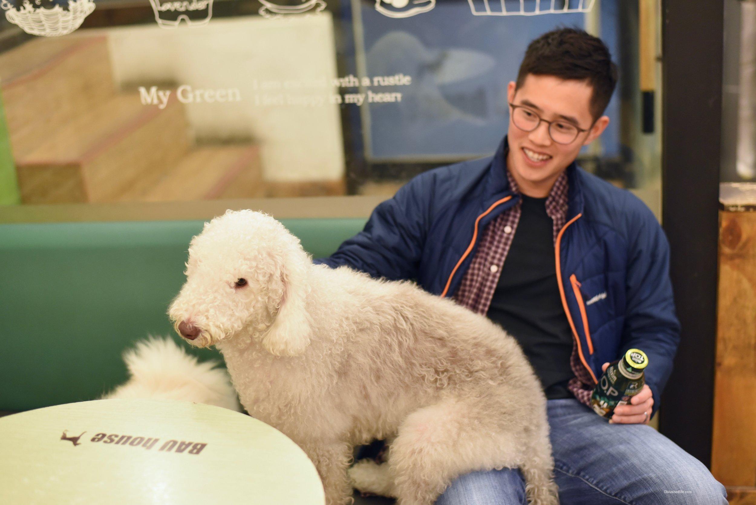 Instagram Korea Dog Cafe Bauhouse_DSC_1093.jpg