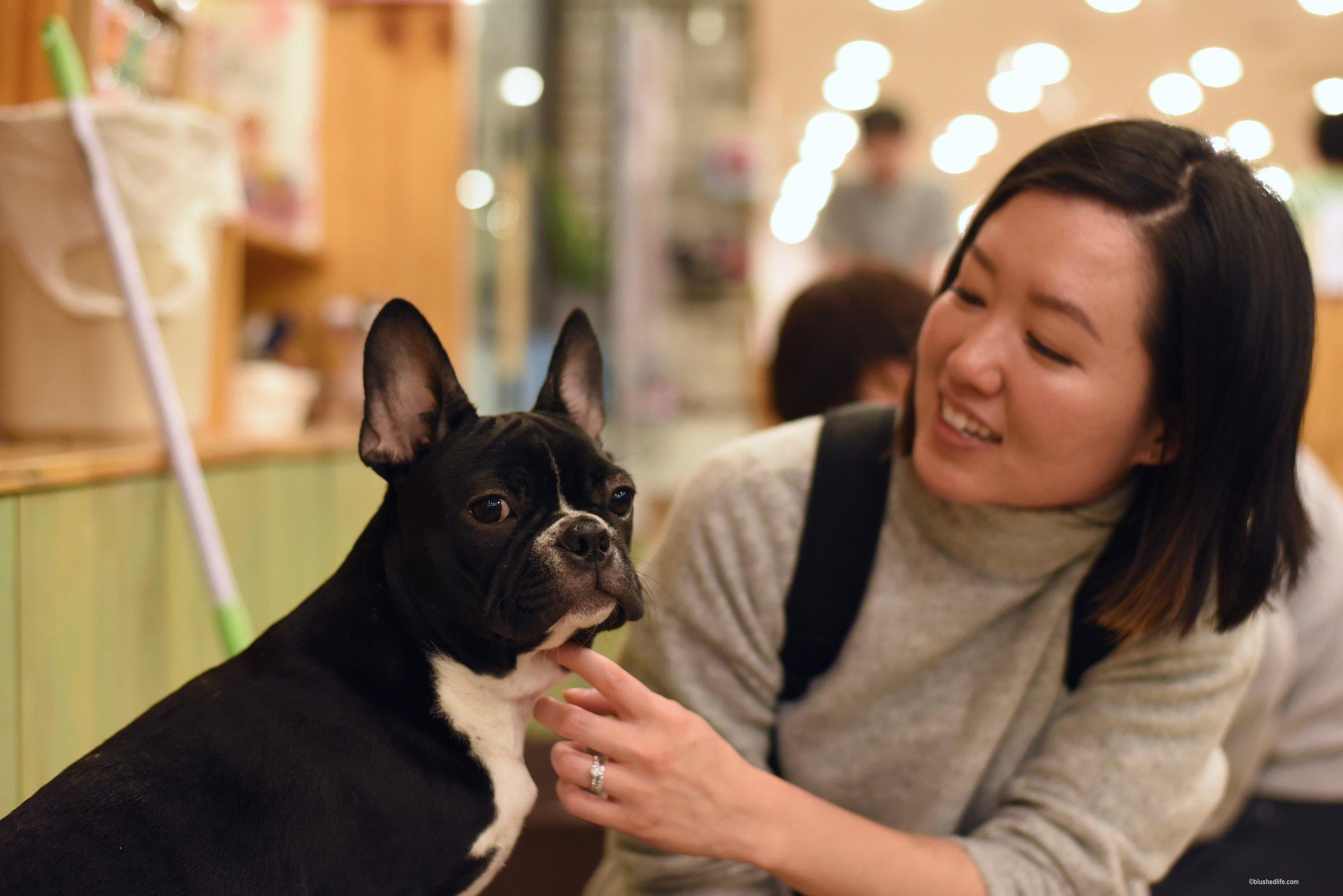 Instagram Korea Dog Cafe Bauhouse_DSC_1115.jpg