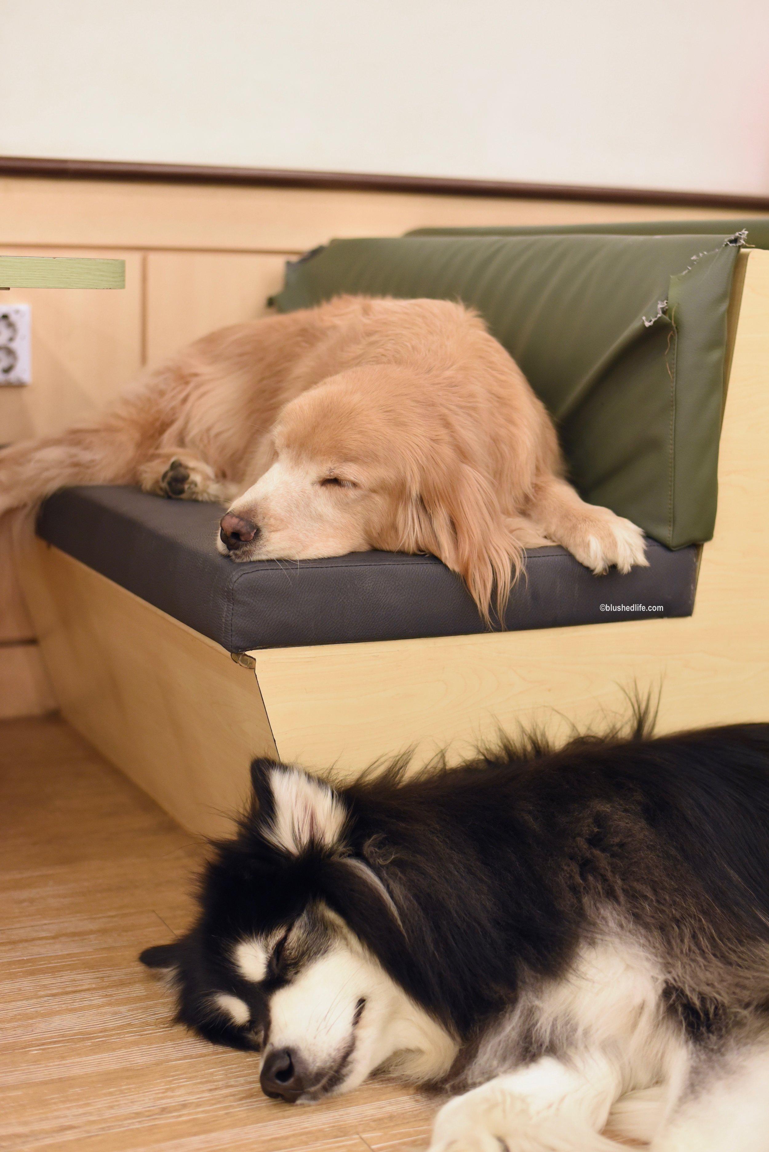 Instagram Korea Dog Cafe Bauhouse_DSC_1088.jpg