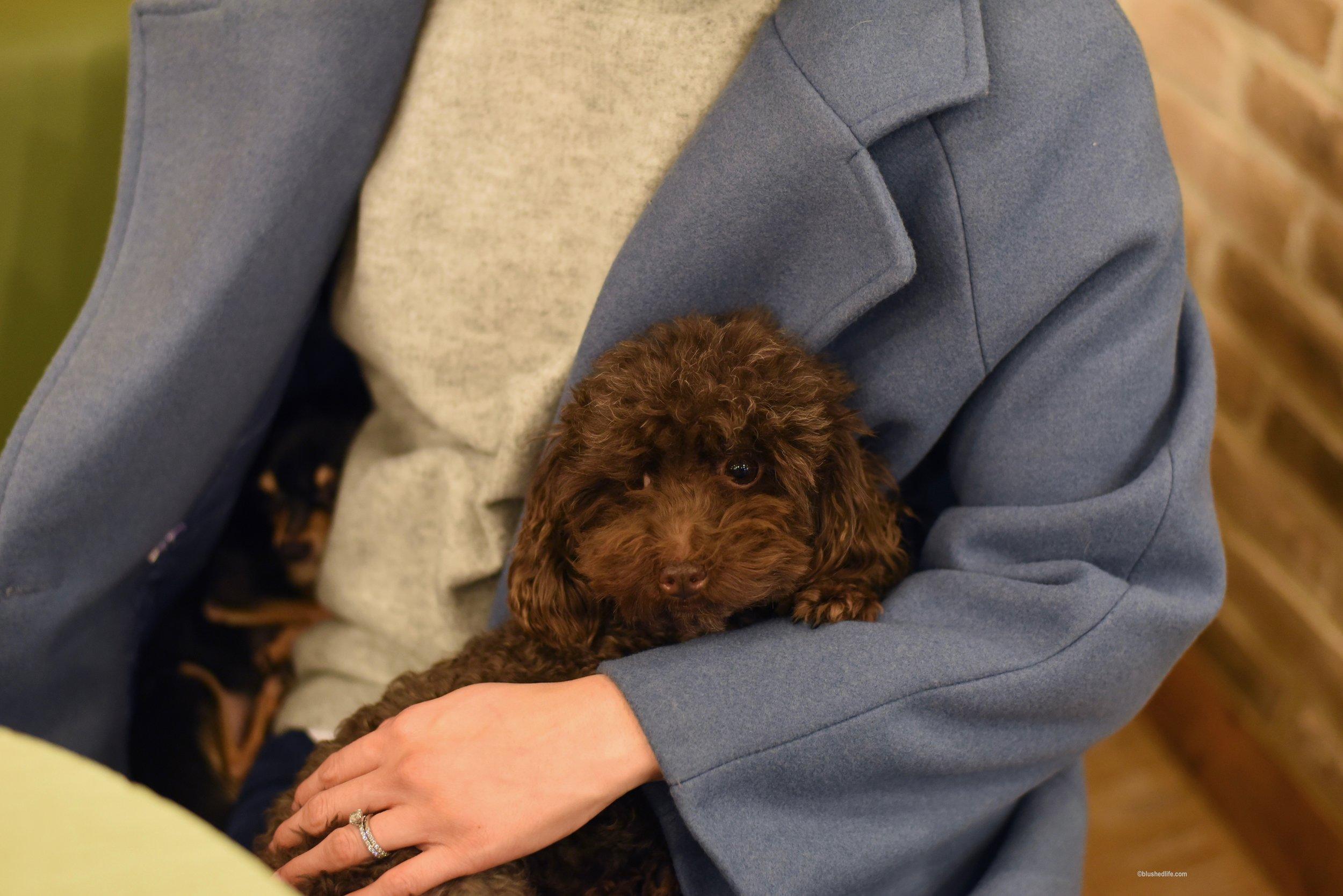 Instagram Korea Dog Cafe Bauhouse_DSC_1124.jpg