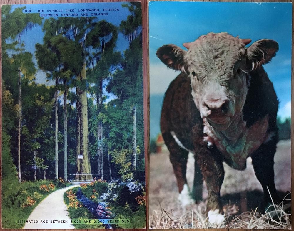 postcard-pair-1.jpg