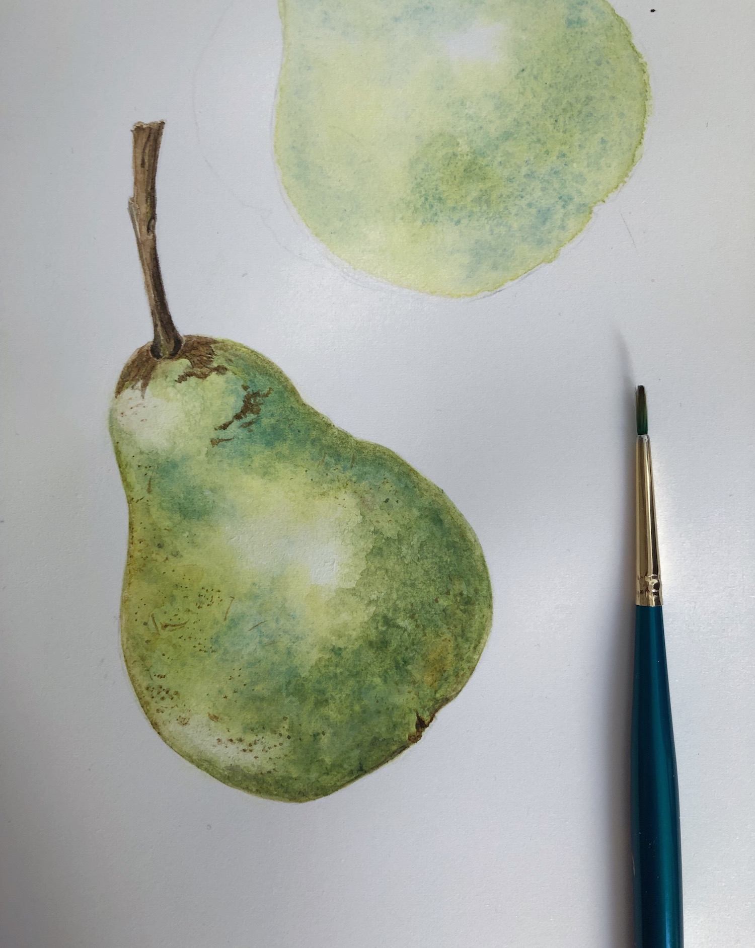 harvest-pear.JPG