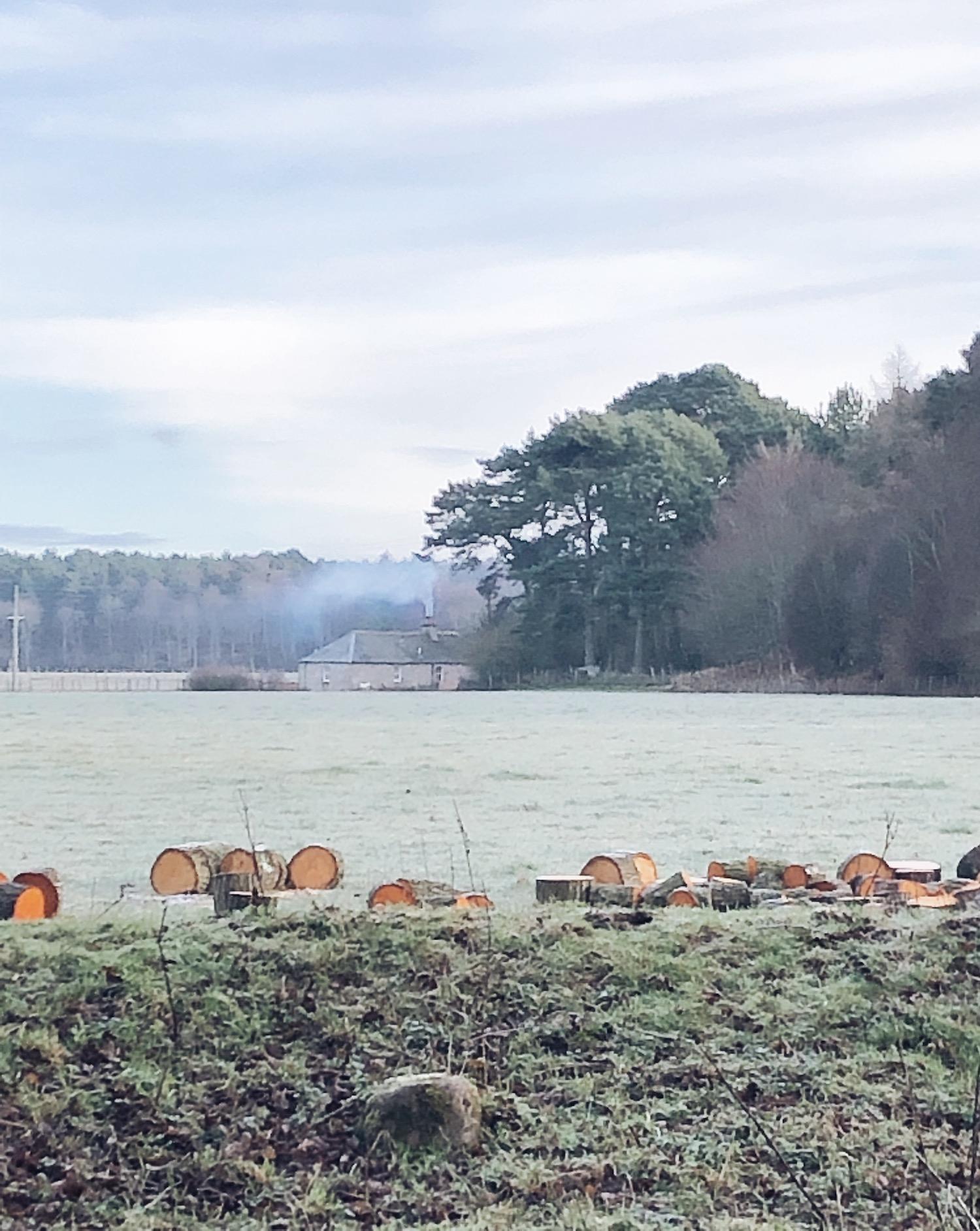 winter field.JPG