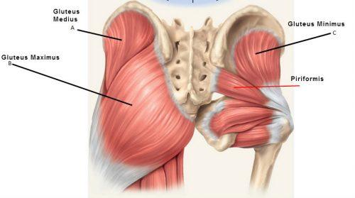 glute-muscles-anatomy-butt-stuff-gluteus-medius-and-piriformis-e1520969540794.jpg