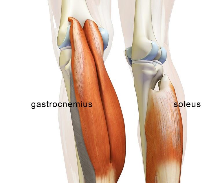 calf muscles.jpg