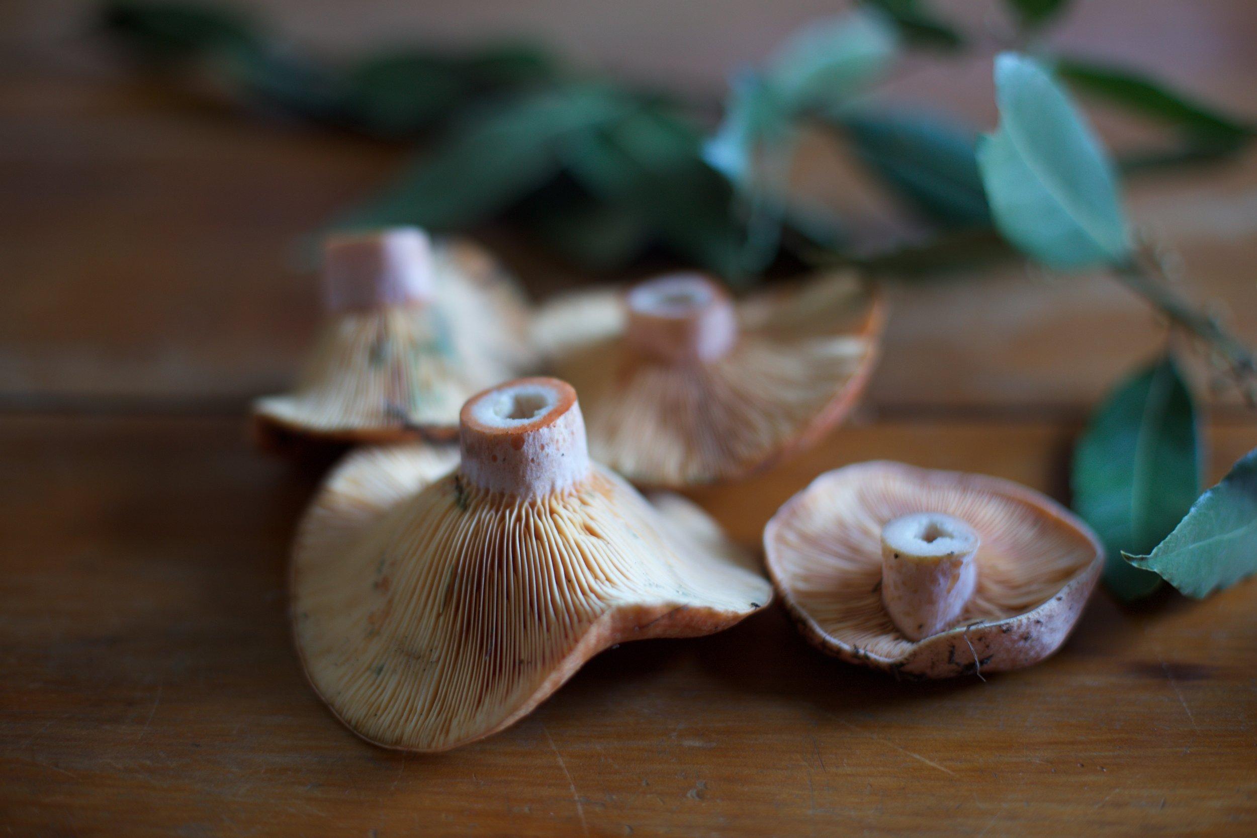 Mushrooms - Photo by Tony De Marco