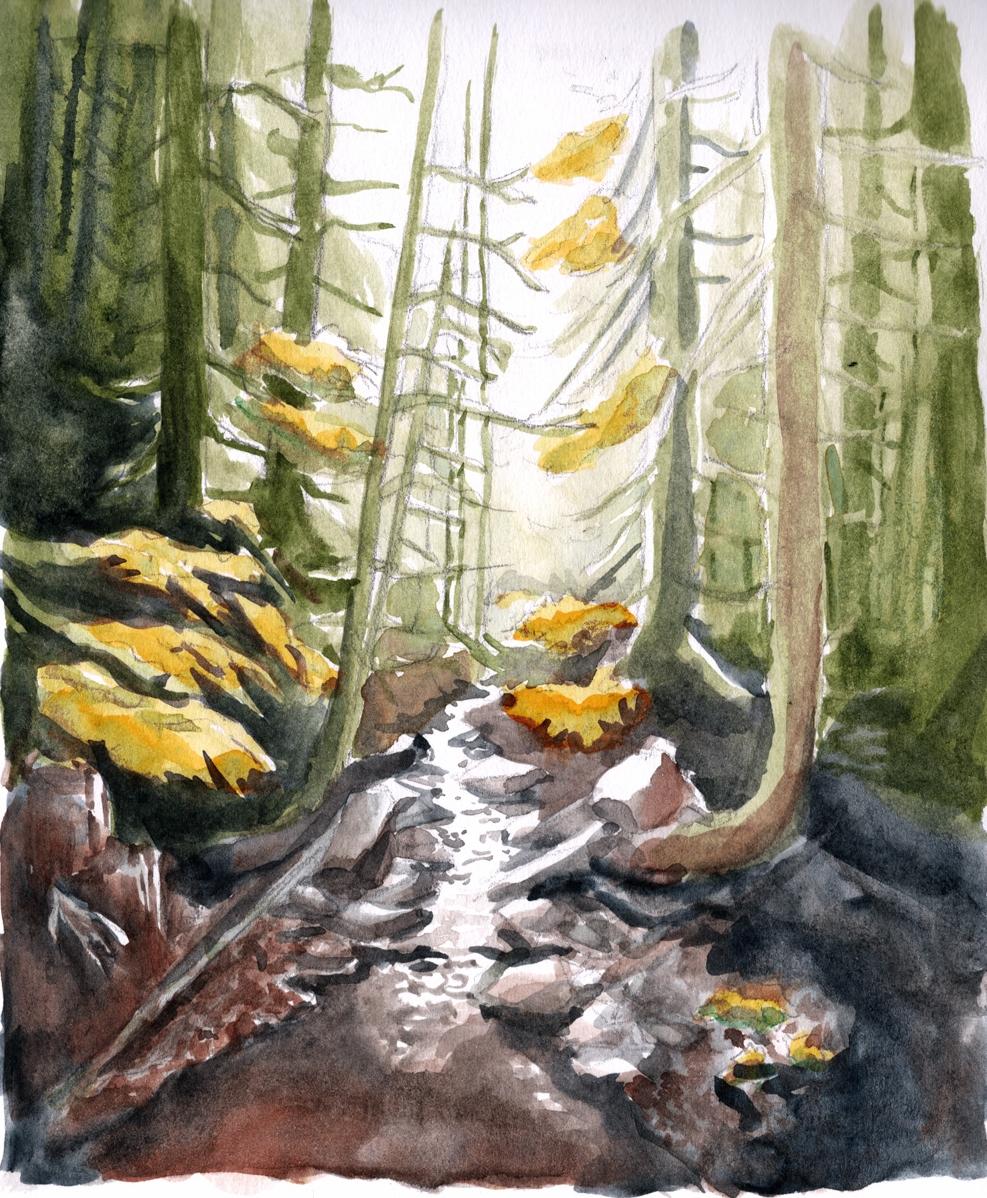 09-17 forest.jpg