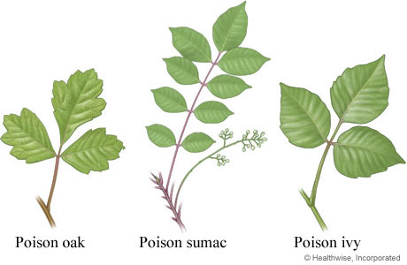 poisonous-plants-hiking-asheville.jpg