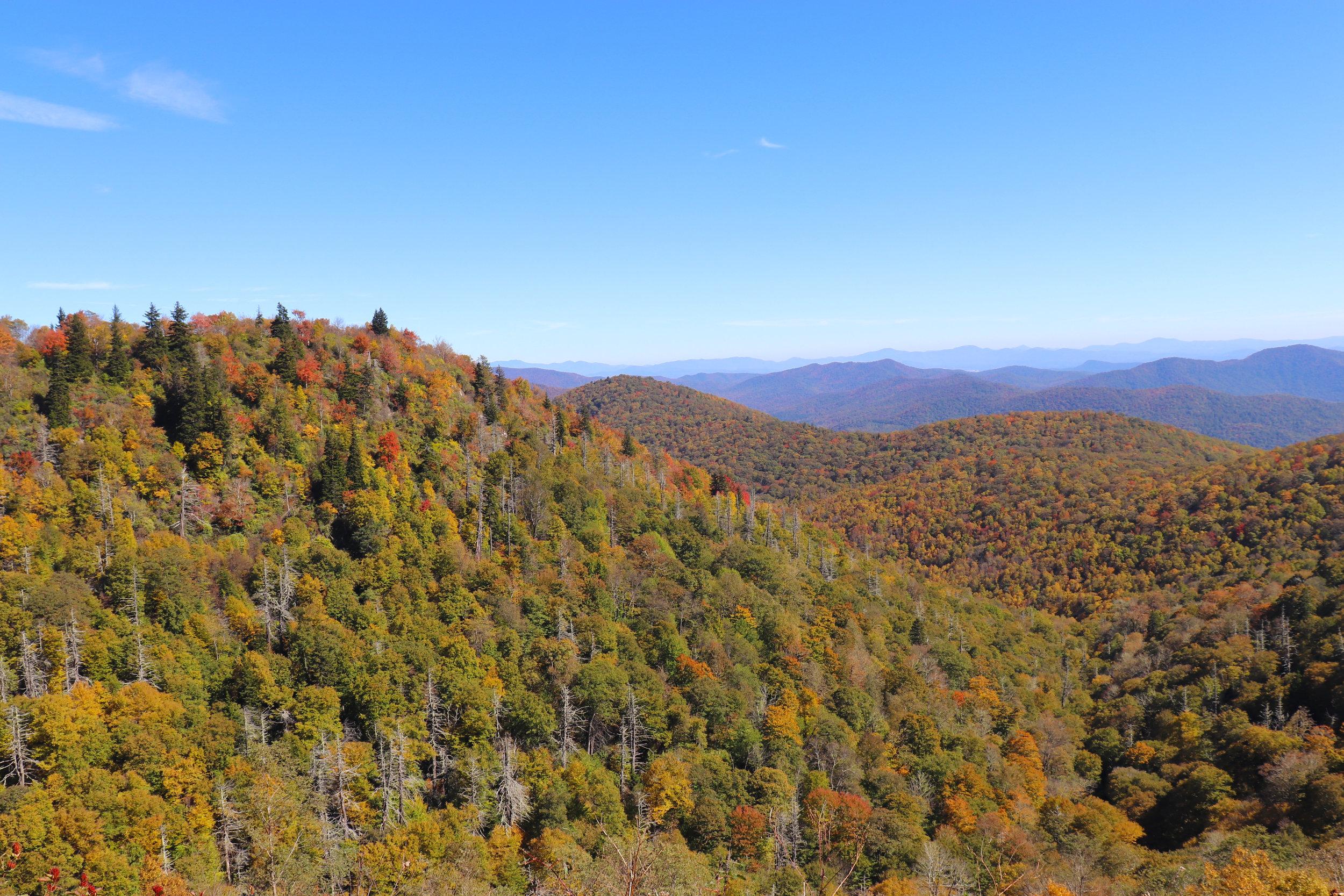 Autumn Fall Foliage in Asheville.jpg
