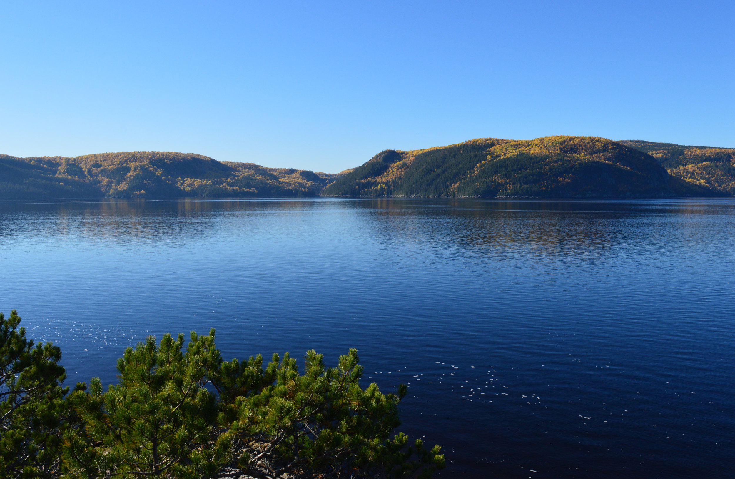 The Saguenay River, to where the beluga whales come less frequently now.