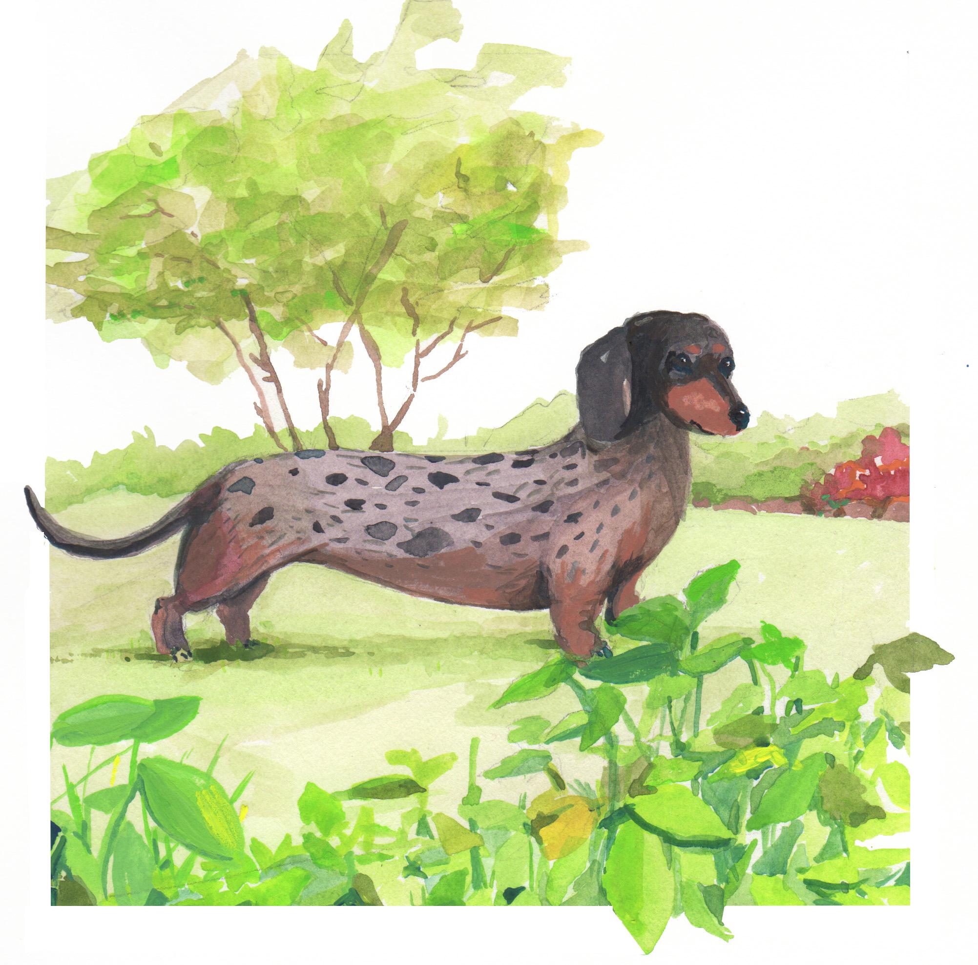 dachshund painting.jpg
