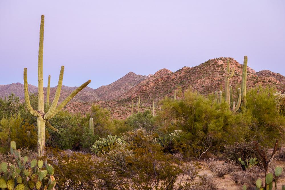 Dusk in Tucson Mountain District, Saguaro National Park, Arizona