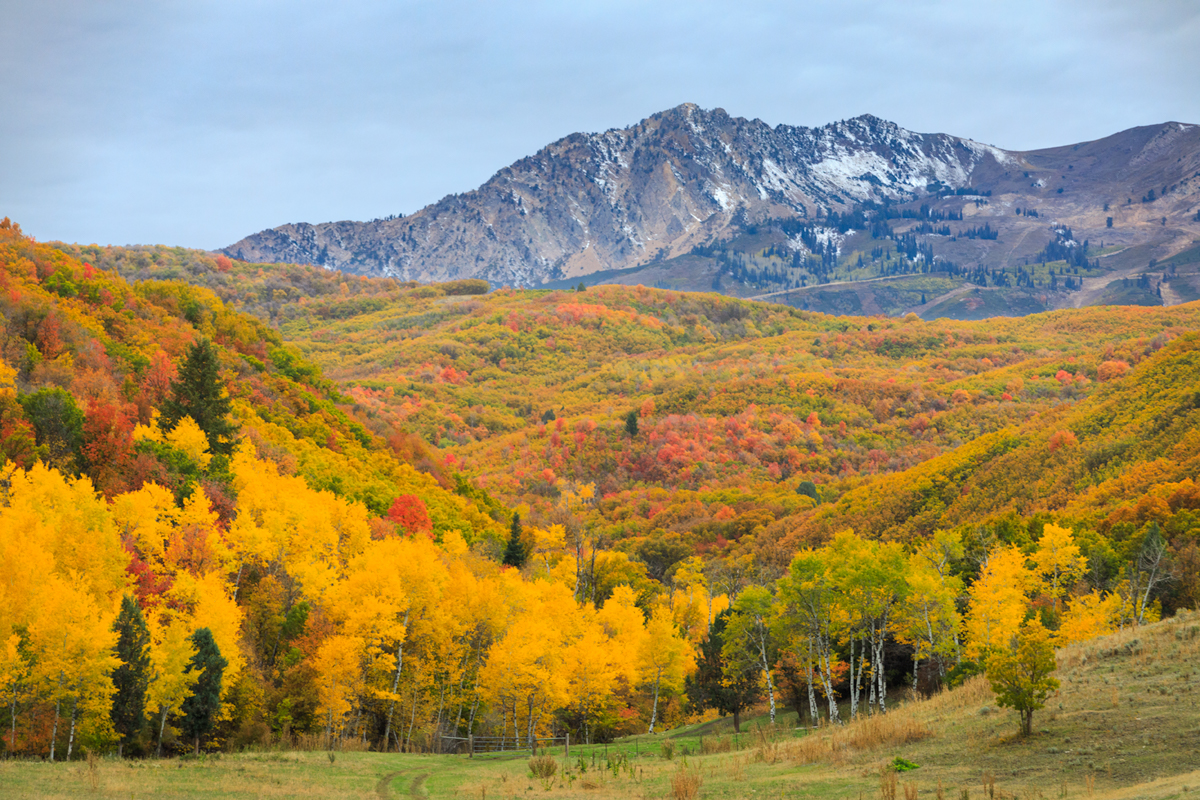 Autumn in the Wasatch Mountains